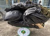 Vận chuyển 16 kg cần sa ngụy trang dưới lớp rau cải