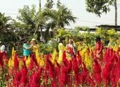 Ngắm muôn sắc hoa Sa Đéc làm nao lòng du khách