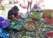 Trà Vinh tạo điều kiện cho thương lái thu mua nông, thủy sản