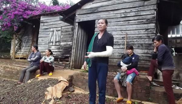 Hội cựu chiến binh xin bảo lãnh cho 7 bị cáo 'phá rừng'