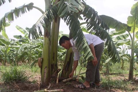 Mê Linh, Thạch Đà, lò gạch, Đan Phượng, nông dân...