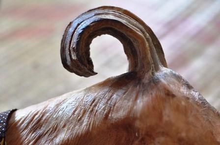 Chiếc sừng dài khoảng 20cm, đầu cụp xuống khiến cụ đau nhức suốt ngày