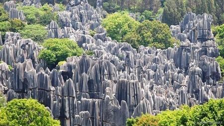 Cánh rừng đá ở Trung Quốc: