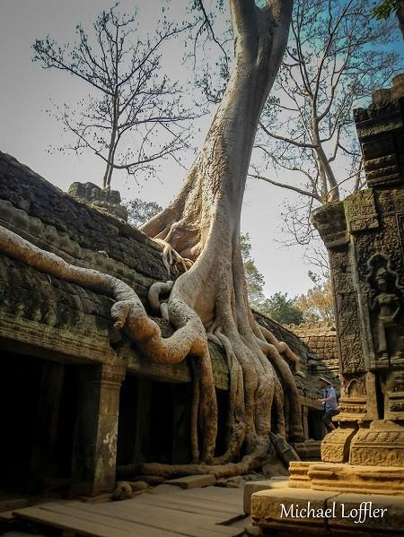 Đền Ta Prohm, Campuchia