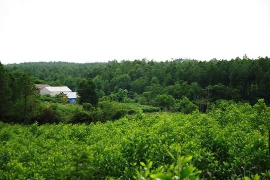 Một nhánh ở khu rừng thuộc quyền quản lý của Lâm trường Trường Sơn, nơi 2 cán bộ bảo vệ rừng bị Thành dùng dao chém vào người nhiều nhát.