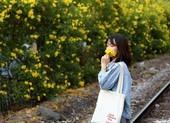Hoa huỳnh liên vào mùa nở rộ dọc đường tàu Sài Gòn