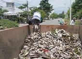 Cá chết nổi trắng, bốc mùi tại hồ điều tiết ở Đà Nẵng