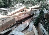 Bắt trạm trưởng bảo vệ rừng Đại Ninh vì bao che phá rừng