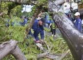 Thừa Thiên - Huế thiệt hại hơn 500 tỉ đồng do bão số 5