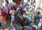 Cá voi hơn 1 tấn dạt vào bờ biển Nha Trang