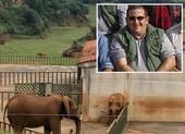 Tử vong sau khi bị voi dùng vòi ném vào hàng rào sắt