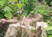 Khởi tố 5 cán bộ vụ mở đường phá rừng