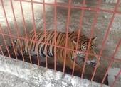 ENV đề nghị Bình Dương chấm dứt việc nuôi hổ thí điểm