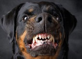 Để chó cắn chết người: Có thể lãnh 14 năm tù