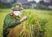 Chiến sĩ công an Yên Dũng giúp người dân bị cách ly gặt lúa
