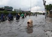 Mưa lớn, đường ngập, người dân hối hả đi móc cống
