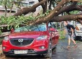 TP.HCM: Mưa to gió lớn, cây đổ đè trúng ô tô, người