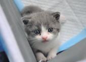 1 phụ nữ Nga bị bắt giữ do nuôi quá nhiều mèo?