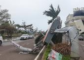 Cảnh tan hoang sau bão số 9 ở TP Quy Nhơn, Bình Định
