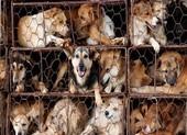 4 nhóm tình trạng sức khỏe không nên ăn thịt chó