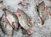 Mẹo phân biệt cá tươi đông lạnh và cá ươn?