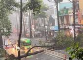 Cây dầu bật gốc, đè người ở đường Nguyễn Tri Phương