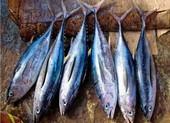 Vì sao cá ngừ dễ gây ngộ độc khi ăn?