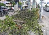 Dân bất ngờ vì nhiều cây xanh còn khỏe bỗng dưng bị đốn hạ