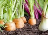 4 loại rau bổ dưỡng, phát triển nhanh dễ trồng trong vườn nhà