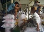Gạo Việt tiếp tục đắt khách, giá bán tăng cao