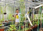 Tài Trần: khởi nghiệp tay trắng đến chủ vườn lan đột biến