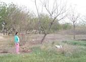Nguyên nhân đất nhiễm mặn, cây chết tại Vĩnh Tân
