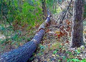 Lập chuyên án điều tra vụ rừng Tà Kóu bị đầu độc bằng hóa chất