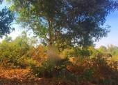 Phát hiện 1 thanh niên chết trong tư thế treo cổ ở rừng tràm