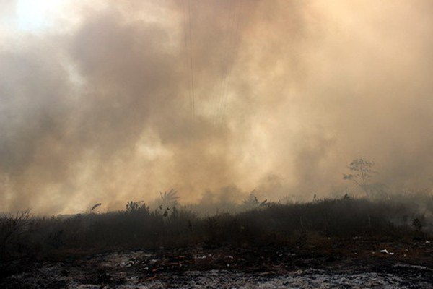 Cháy cỏ; Dĩ An; Bình Dương