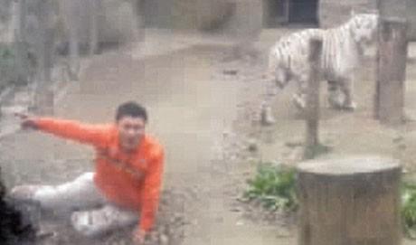 Jinhai liều lĩnh nhảy vào chuồng hổ.