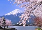 Đến Nhật thấy hoa đẹp chớ vội sà vào chụp hình