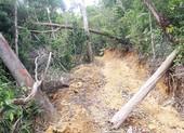 Khởi tố thêm 12 người vụ mở đường phá rừng ở Phú Yên