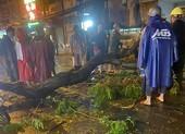 TP.HCM: Cây tét nhánh trong mưa lớn, đè chết người ở quận 10