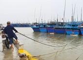Phú Yên cấm biển từ 10g ngày 9-11 để ứng phó bão số 12