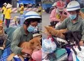 Lý, tình trong vụ tiêu hủy 13 chú chó ở Cà Mau