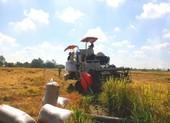 Vụ Đông Xuân 2020-2021 nông dân Miền Tây được mùa, trúng giá