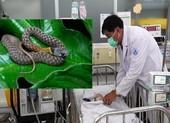Bé gái 15 tháng tuổi tử vong sau 2 ngày bị rắn cổ đỏ cắn