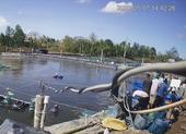 Công an xác định nhóm thương lái trộm 2,6 tấn tôm ở Cà Mau
