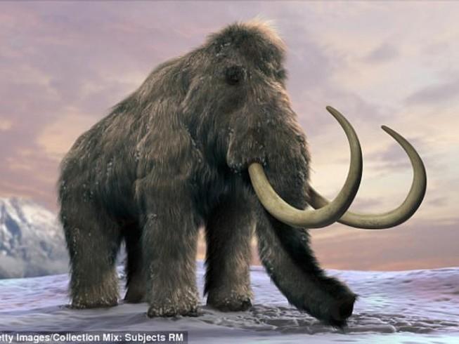 Sắp hồi sinh thành công voi ma mút?