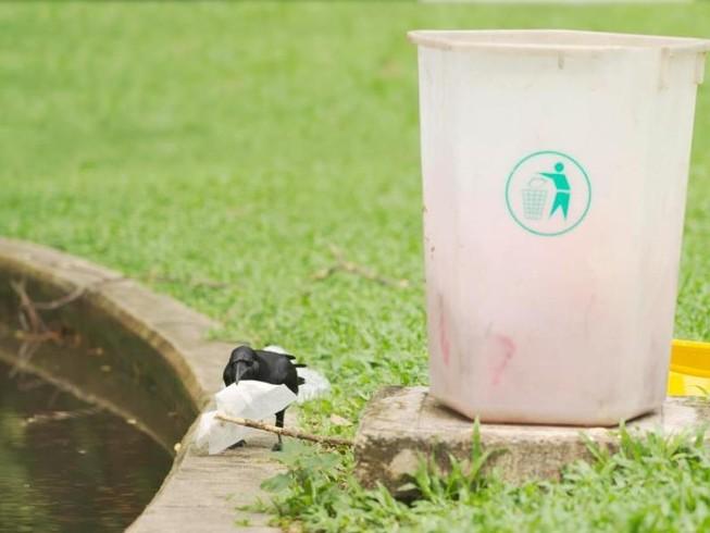 Đào tạo quạ thay người dọn rác công viên