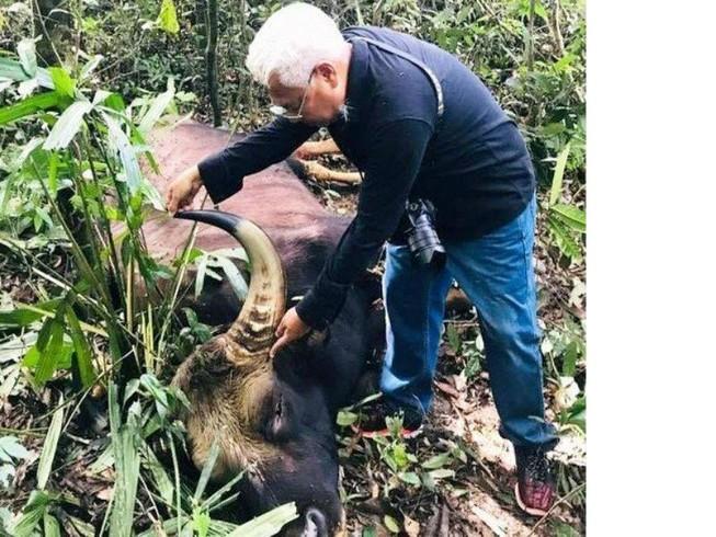 Bò tót nặng 800 kg chết ở Đồng Nai 'có thể do già yếu'