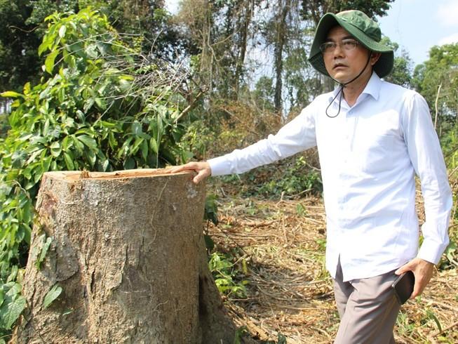 Lãnh đạo Đồng Nai kiểm tra vùng cây bị đốn ở khu bảo tồn