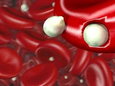 Ký sinh trùng sốt rét kháng thuốc có nguy cơ lan rộng