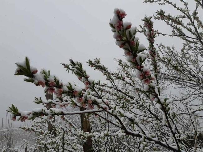 Ngắm tuyết rơi dày, phủ trắng đường ở Sa Pa